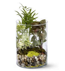 Garden In A Glass Plant Display